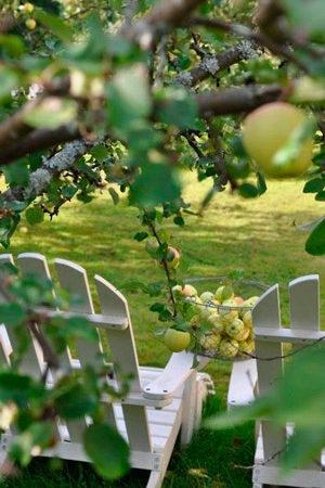 detuin-bolderburen-appelboom
